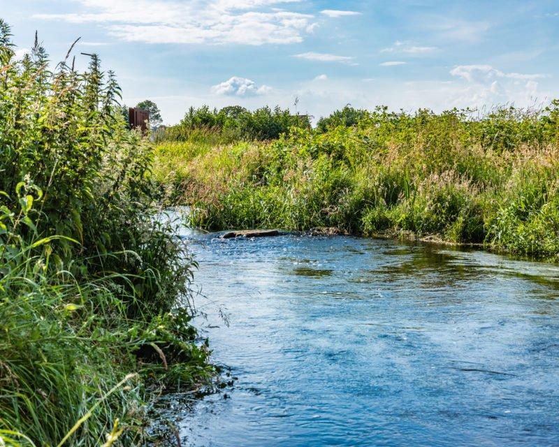Wilde Uferboeschung der Bocholter Aa bei Hohe Mark
