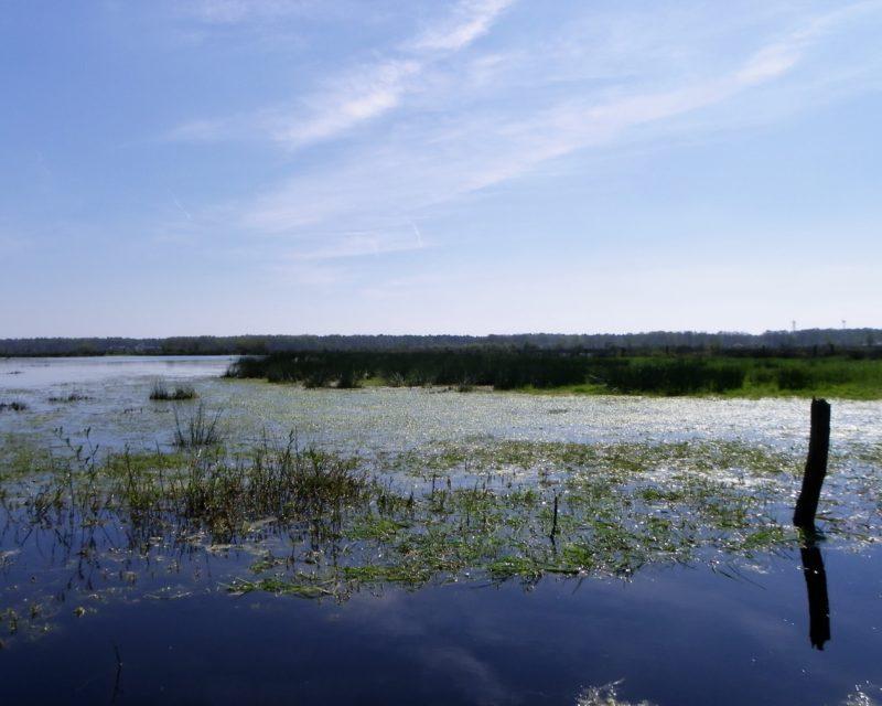 Blick auf Gewaesser und Feuchtwiesen der Dingdener Heide