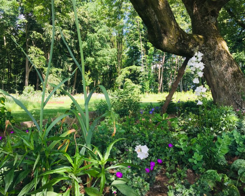 bluehende Blumen im Pflanzenbeet Buergerpark Rhede