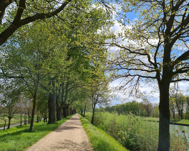 Idyllische Radweg Allee am Wesel-Datteln-Kanal im Fruehjahr