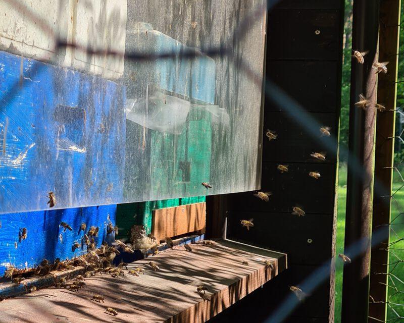 Bienenzucht am Heidhof Bottrop
